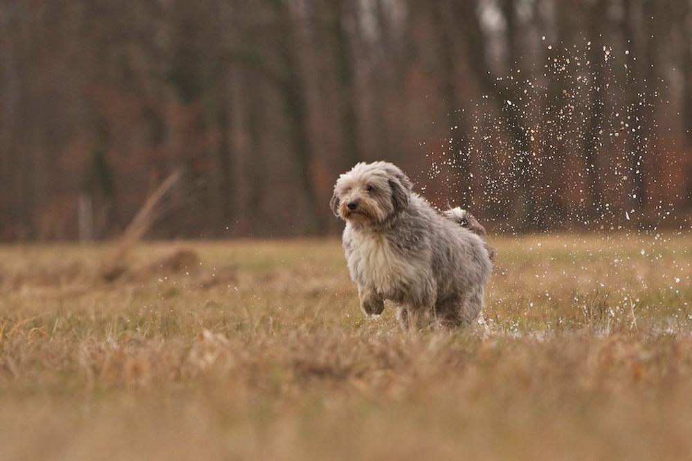 Ein feucht-fröhliches Vergnügen...