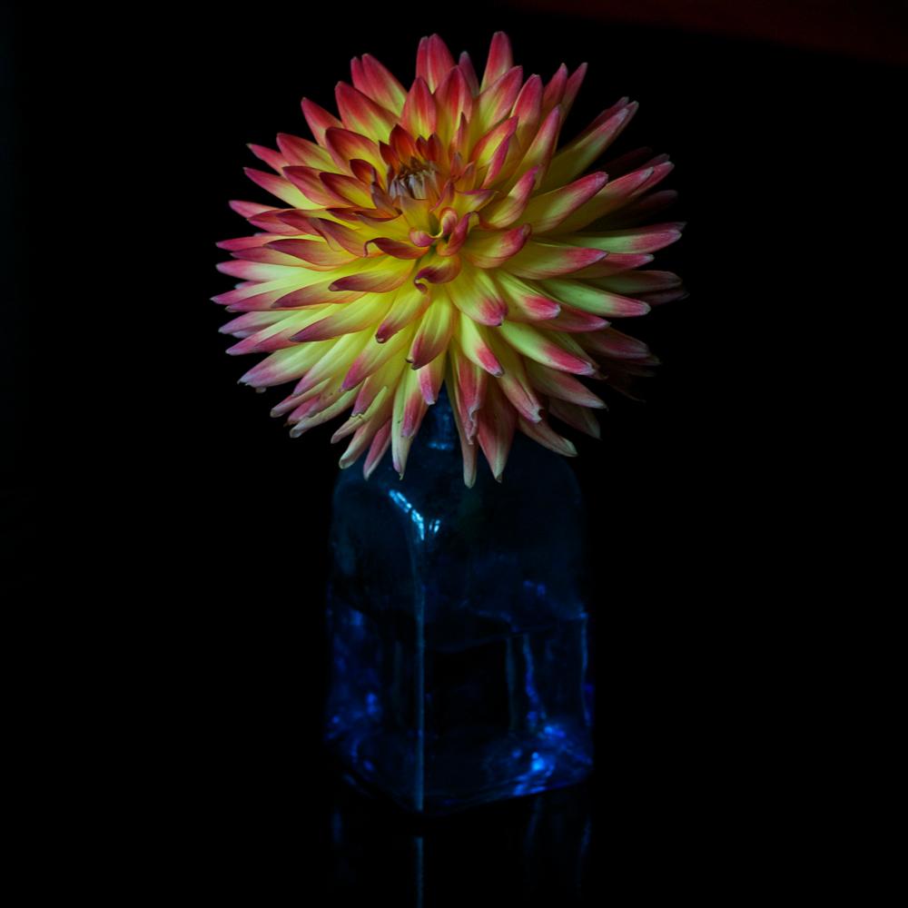 Ein Feuerwerk der Natur von Elisabeth Schiess