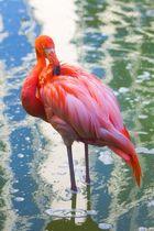 Ein Flamingo