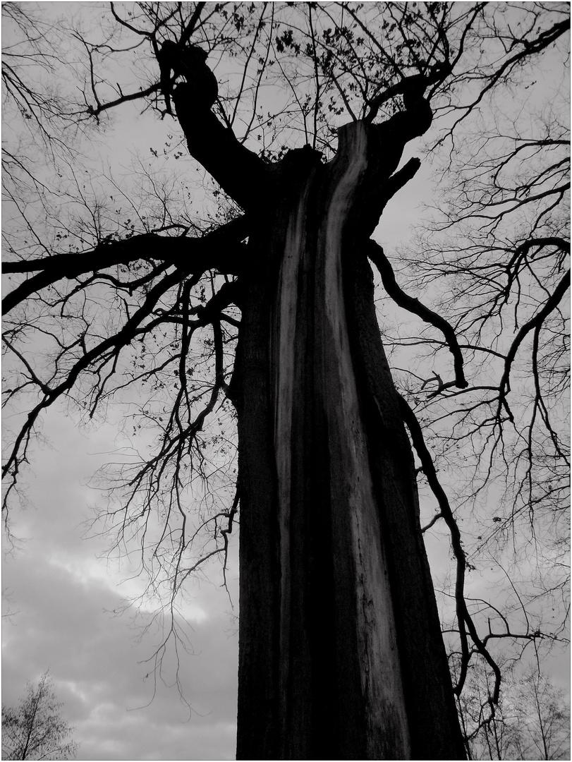 Ein flehender Baum ...