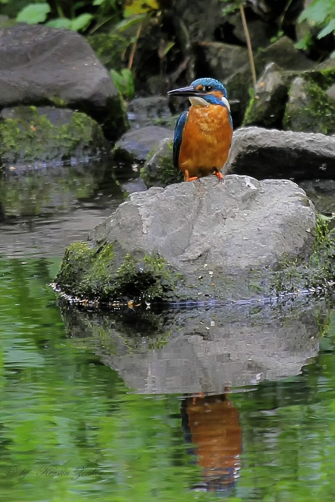 Ein fliegender bzw. sitzender Edelstein