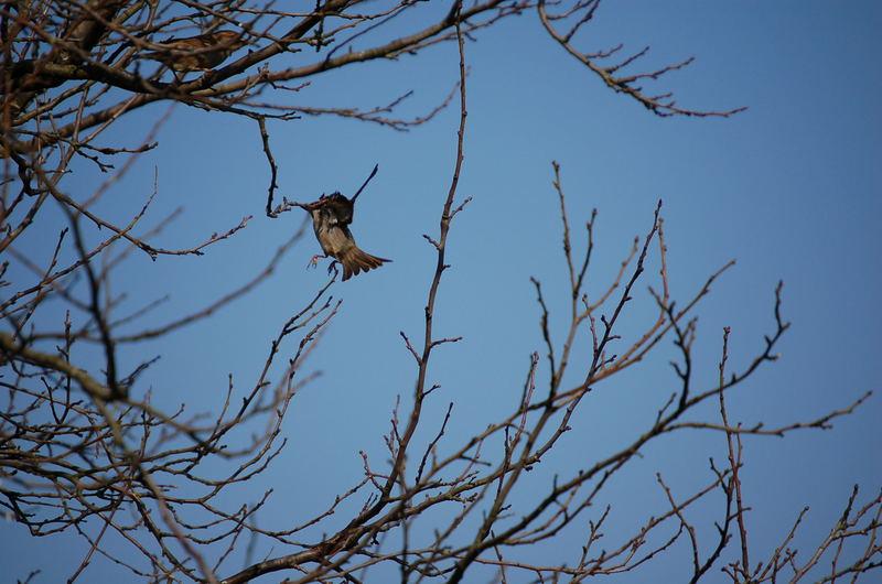 Ein fliegener Vogel