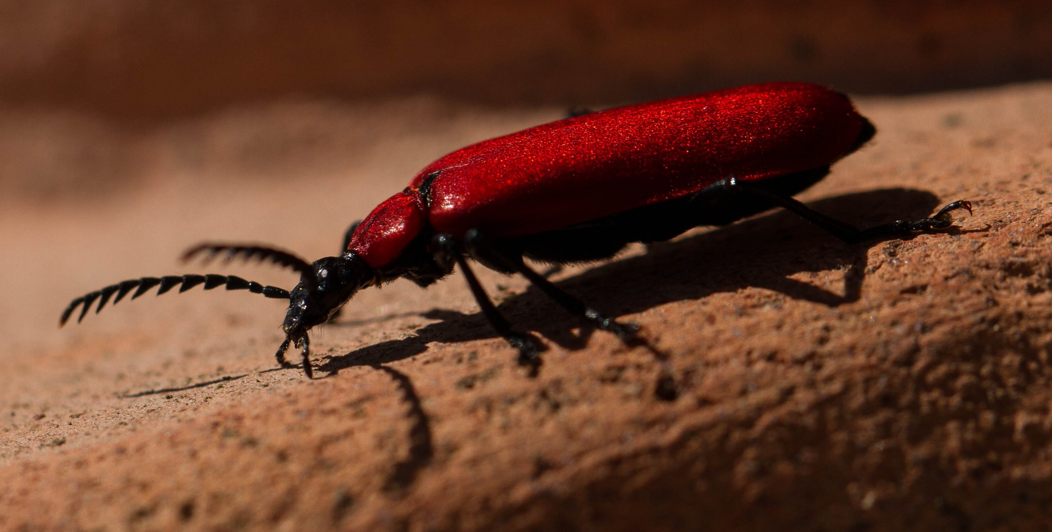Ein Flotter Käfer