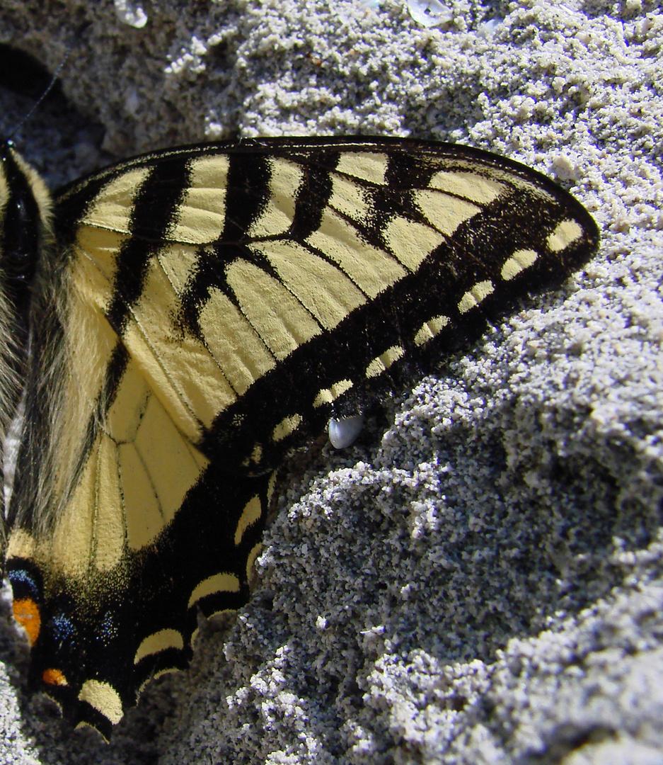 Ein Flügel..........