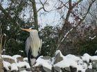 Ein freier Bewohner im Zoo