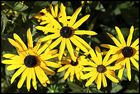 Ein Freitagsblumengruß an alle, bei denen es gerade regnet...