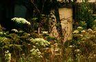 ein friedlicher Platz auf der Sommerwiese von SINA