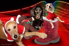 Ein friedliches Weihnachtsfest