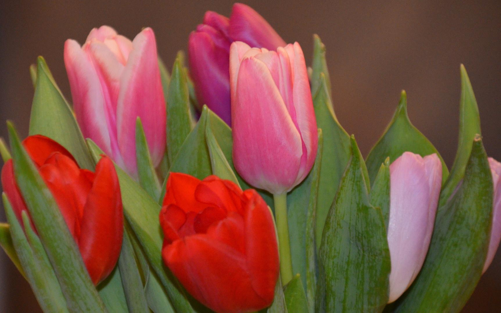 Ein fröhlicher bunter Blumenstrauß :)