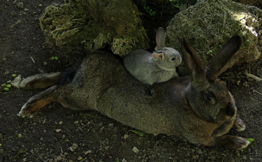 Ein frohes Osterfest ...