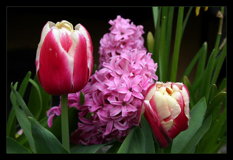 Ein frohes, sonniges Osterfest wünsche ich allen....