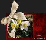 Ein frohes und besinnliches Weihnachtsfest....