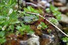 Ein Frosch am Teich