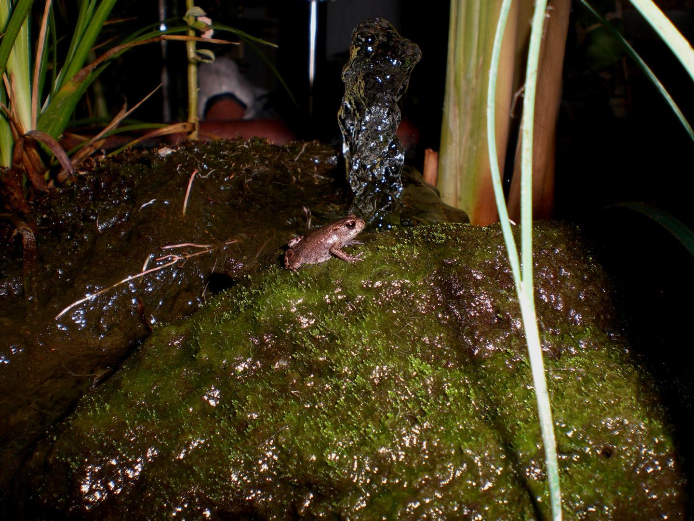 Ein Frosch an der Quelle