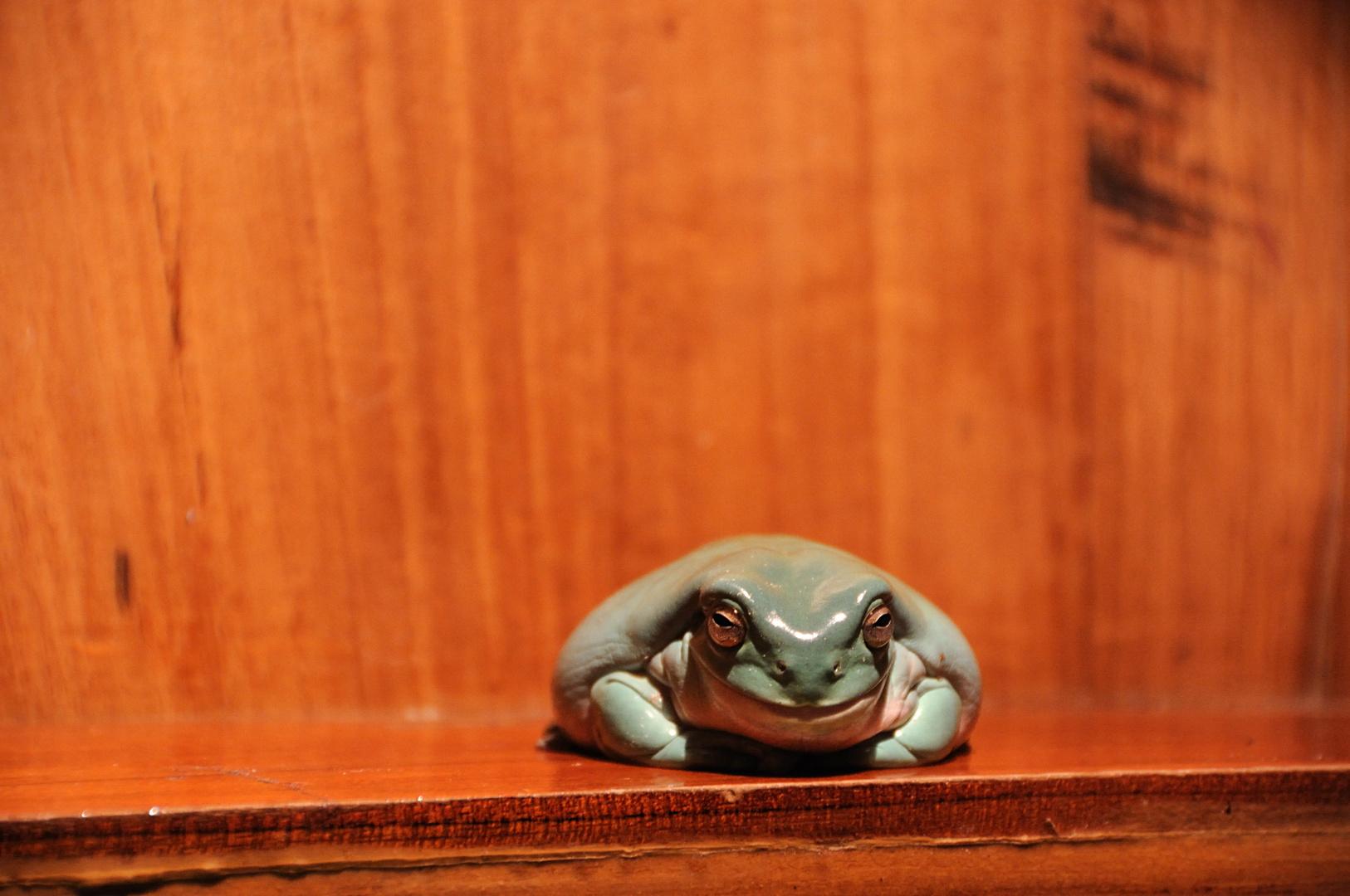 Ein Frosch im Setzkasten