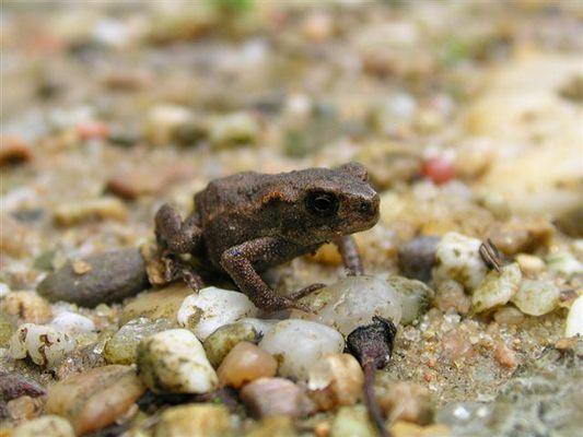 Ein Froschbaby ;-)