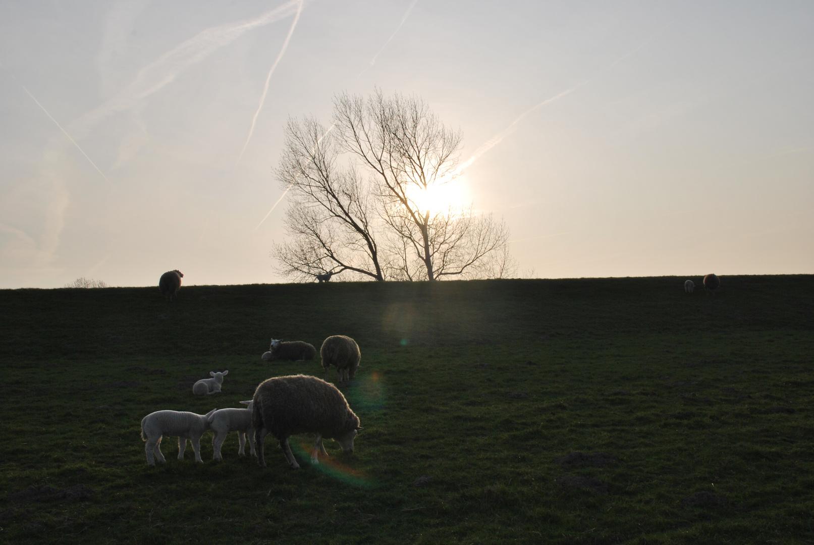 Ein Frühlingsabend im Norden
