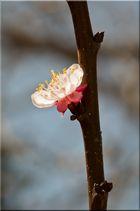 ~ ein Frühlingsgruß ~