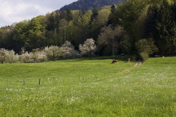 Ein Frühlingsgruss 2