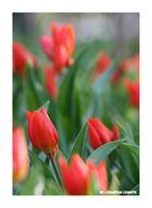 Ein Frühlingsgruß