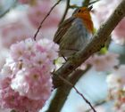 ein Frühlingsgruss