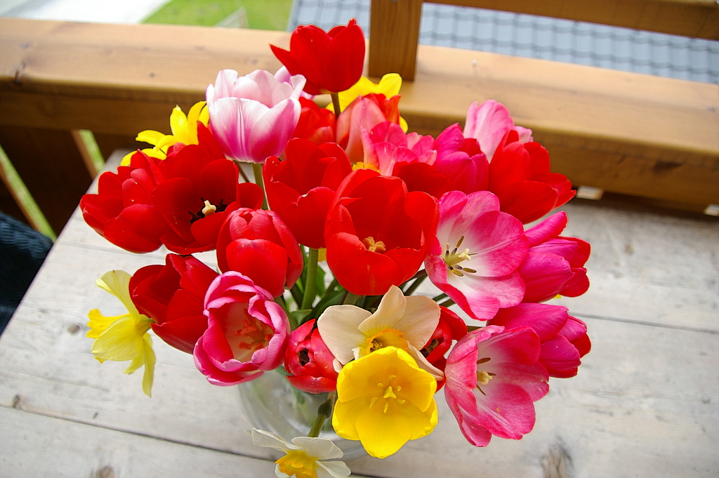 Ein Frühlingsgruß....