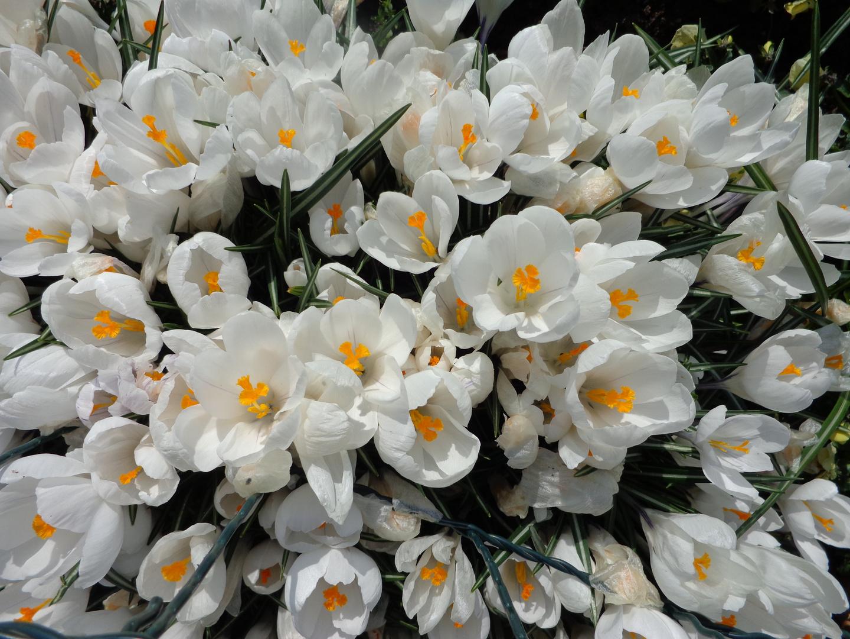 Ein Frühlingsgruß . . .
