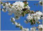 Ein Frühlingsgruß - und dann bin ich mal wieder weg