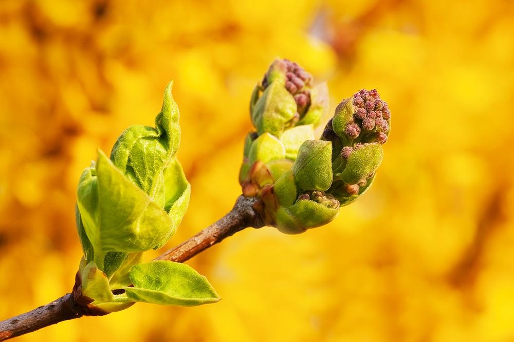 Ein Frühlingsklassiker