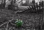 Ein Frühlingssträußchen ...