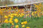 Ein Frühlingstag im Zoo.....