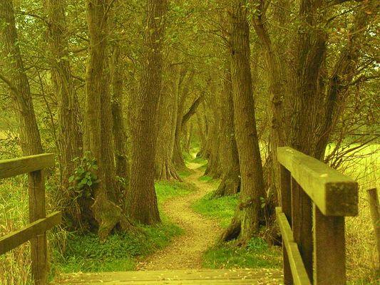 Ein Fußweg