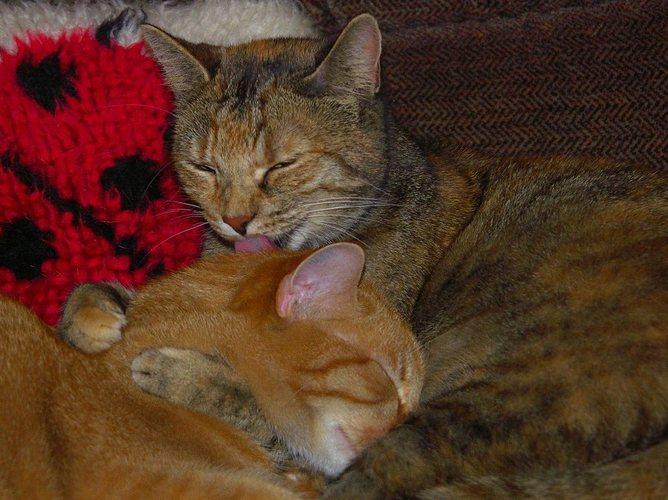 Ein ganz besonderes Katzenpaar