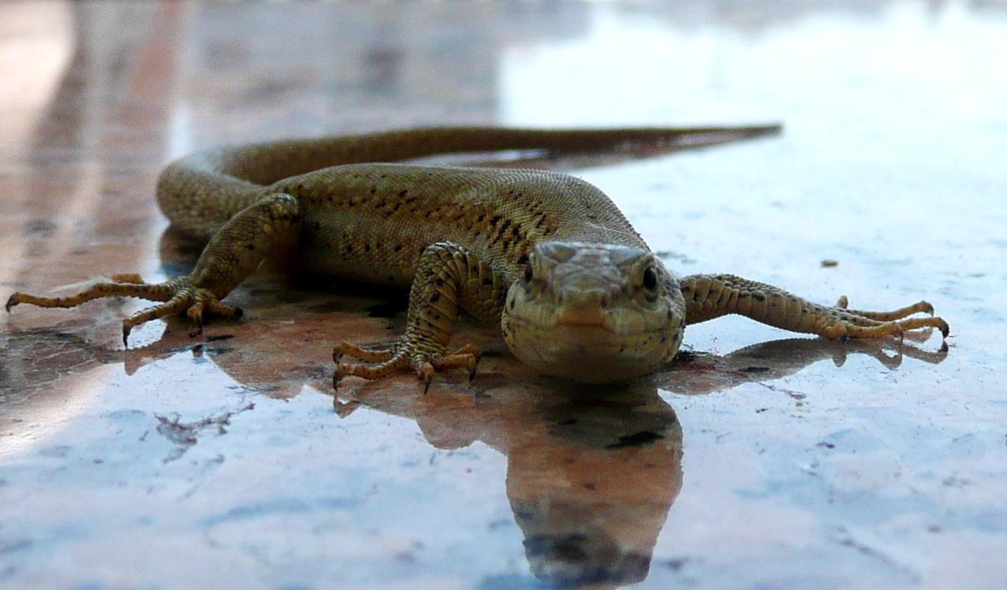 ein ganz schöner Gecko