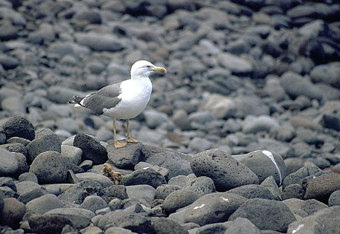 ein ganz seltener vogel