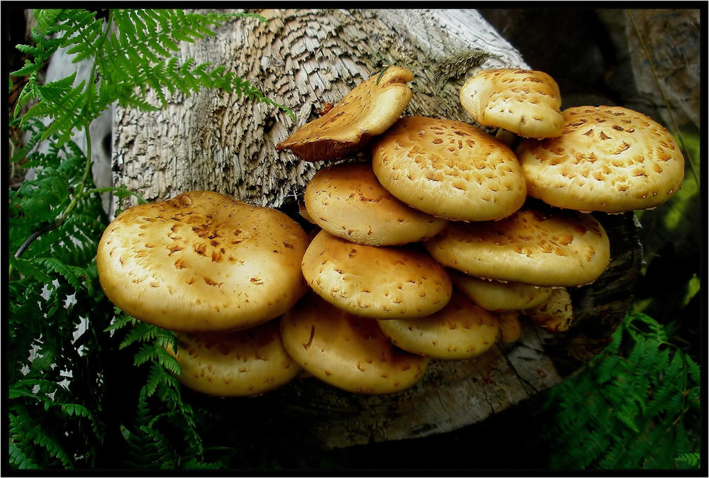 Ein ganzes Büschel Pilze