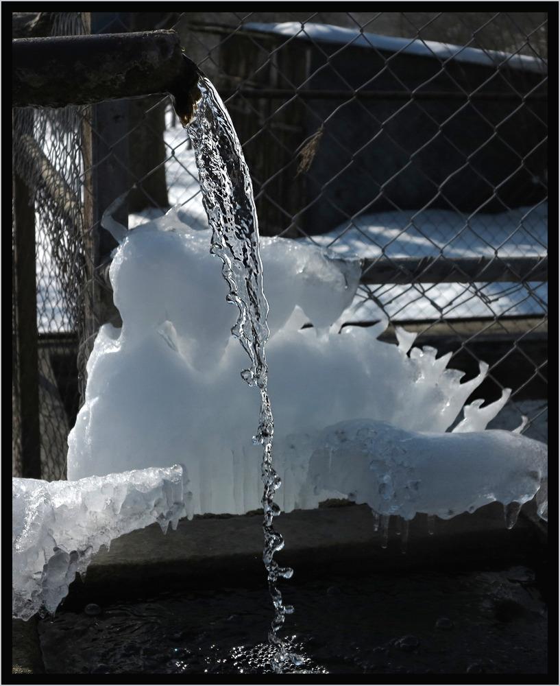 ein garstiger Zaun, ein verwahrloster Brunnen... aber dann...