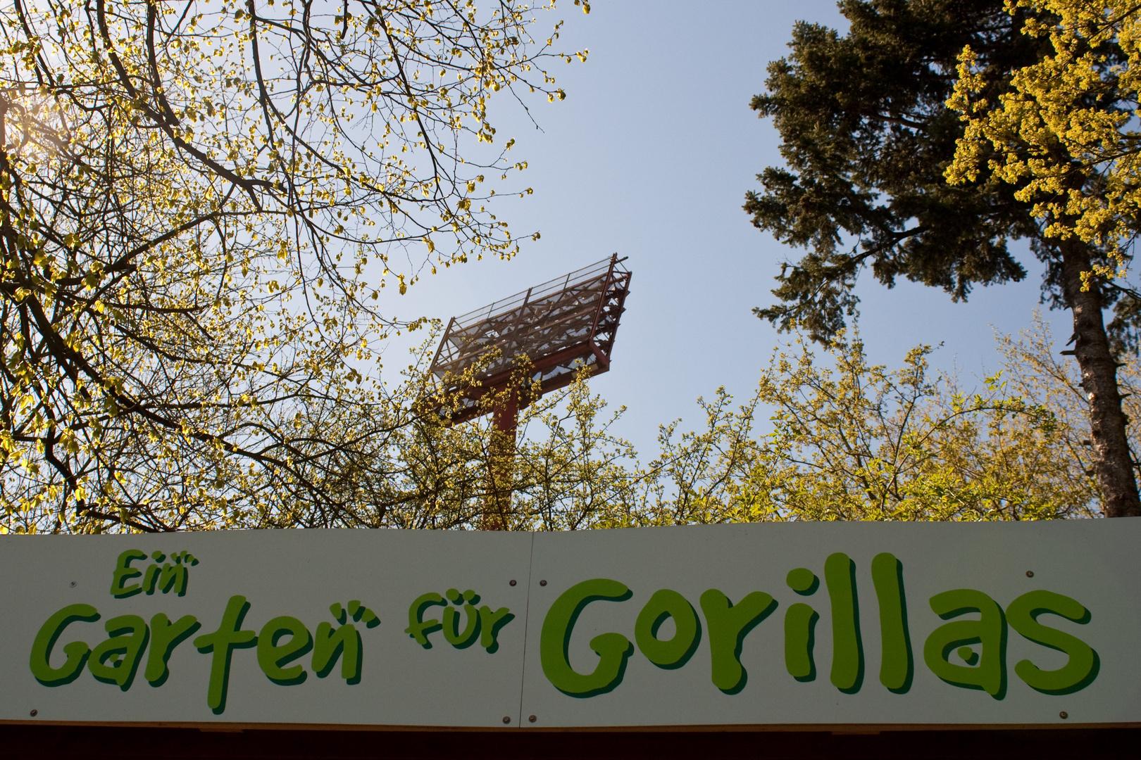 Ein Garten für Gorillas