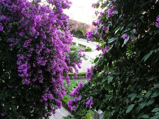 Ein Garten in Lissabon
