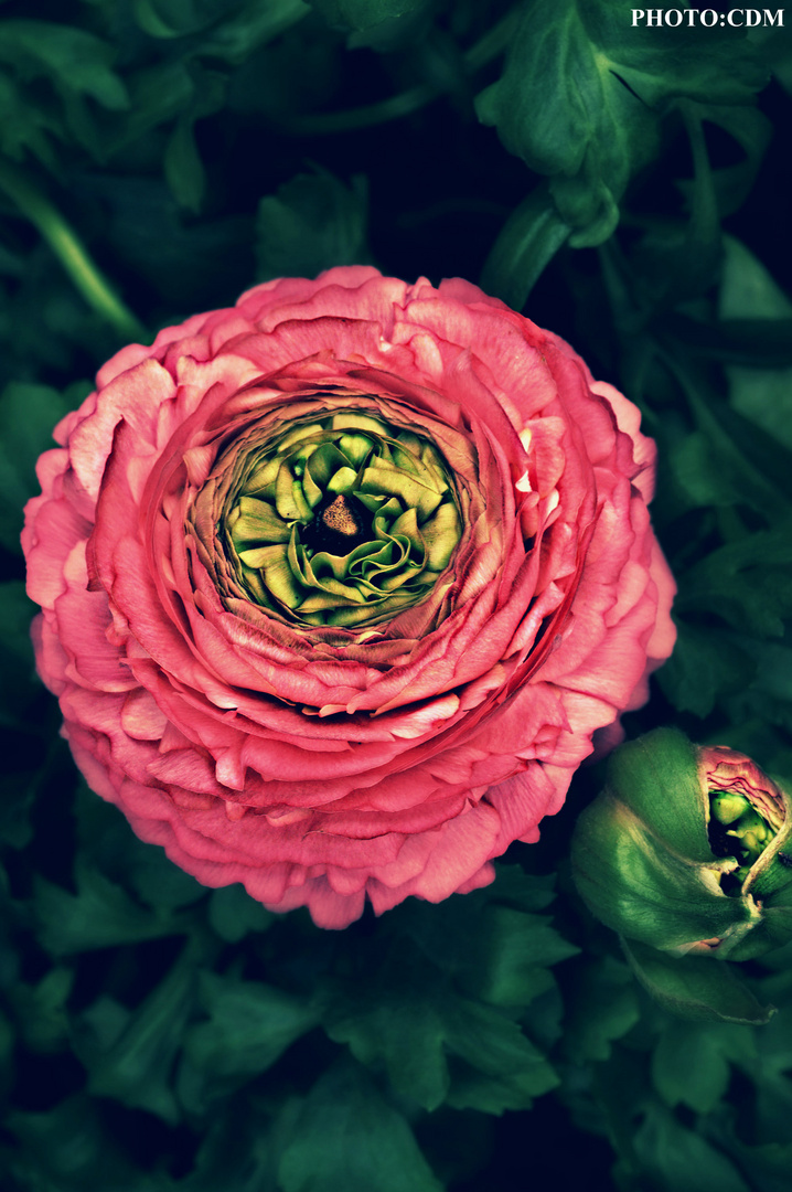 Ein Garten ist eine Kunstnatur.