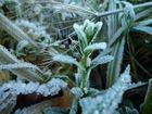 ein gefrorrener frischer trieb auf einer baldigen frühlingswiese