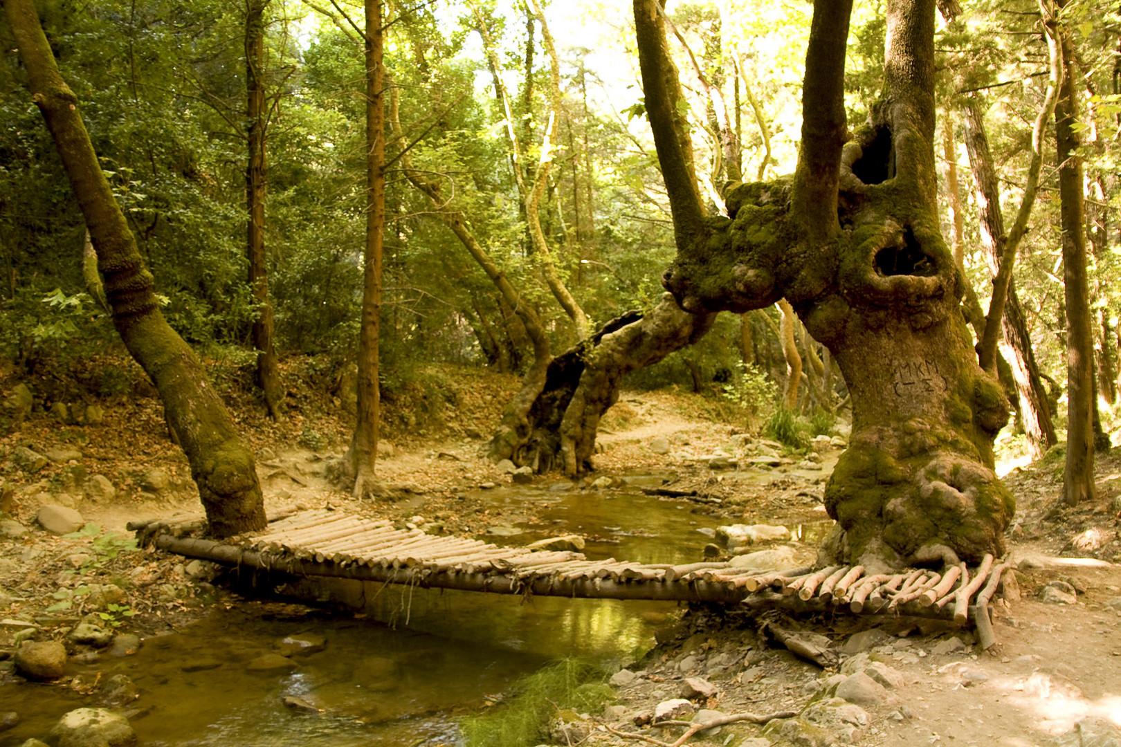 Ein Geheimnisvoller Wald