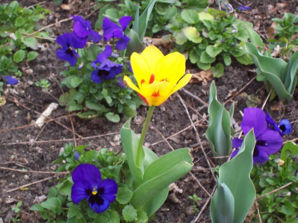 Ein Gelb in Blau