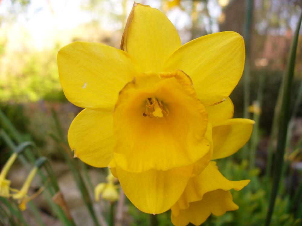 Ein gelber Schein so hell wie die Sonne