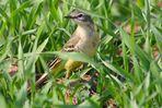 Ein gelbes Vögelchen