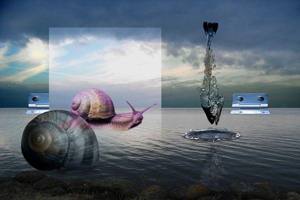 Ein gläsernes Schneckenhaus, und ein Fisch hat Heimweh