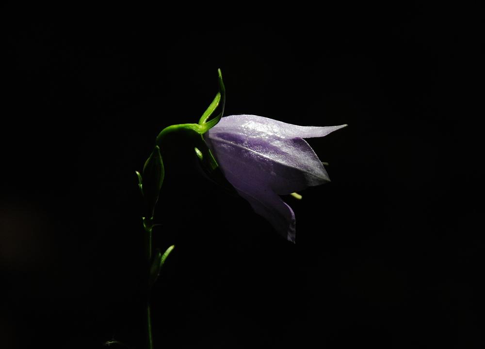 Ein Glöckchen im Dunkeln