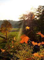 Ein Goldener Herbsttag und was man so alles entdeckt!