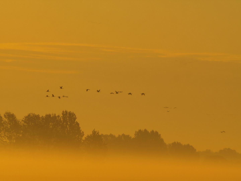 Ein goldener Oktobermorgen...