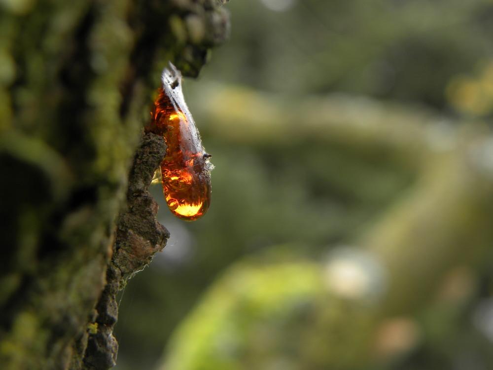 ein goldener Tropfen der Natur